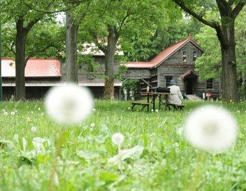 札幌カメラさんぽ。絵になる定番観光スポット巡り。北大/芸術の森/ラーメン/藻岩山展望台