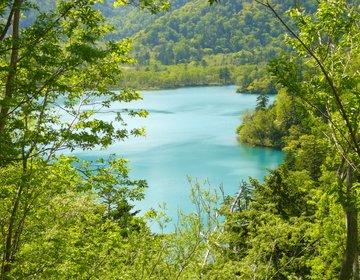 北海道ドライブ 不思議の湖と天然露天風呂めぐるグルメ旅!【市場、鮨の魚政、丸駒温泉、支笏湖、翠明閣】
