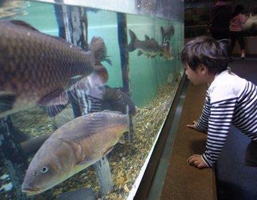 【子連れ・デート!】しながわ水族館で遊んで、駅近NYスタイルのイタリアンでランチ。雨の日もOK。