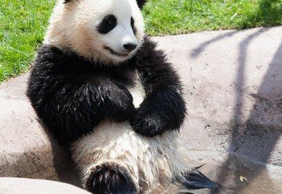 アドベンチャーワールド PANDA LOVE