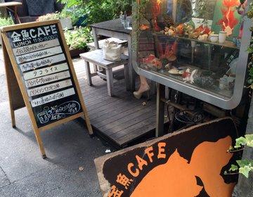 【代々木】しっとり女子会やおひとり様ランチに。金魚だらけの隠れ家的おしゃれカフェ「金魚CAFE」