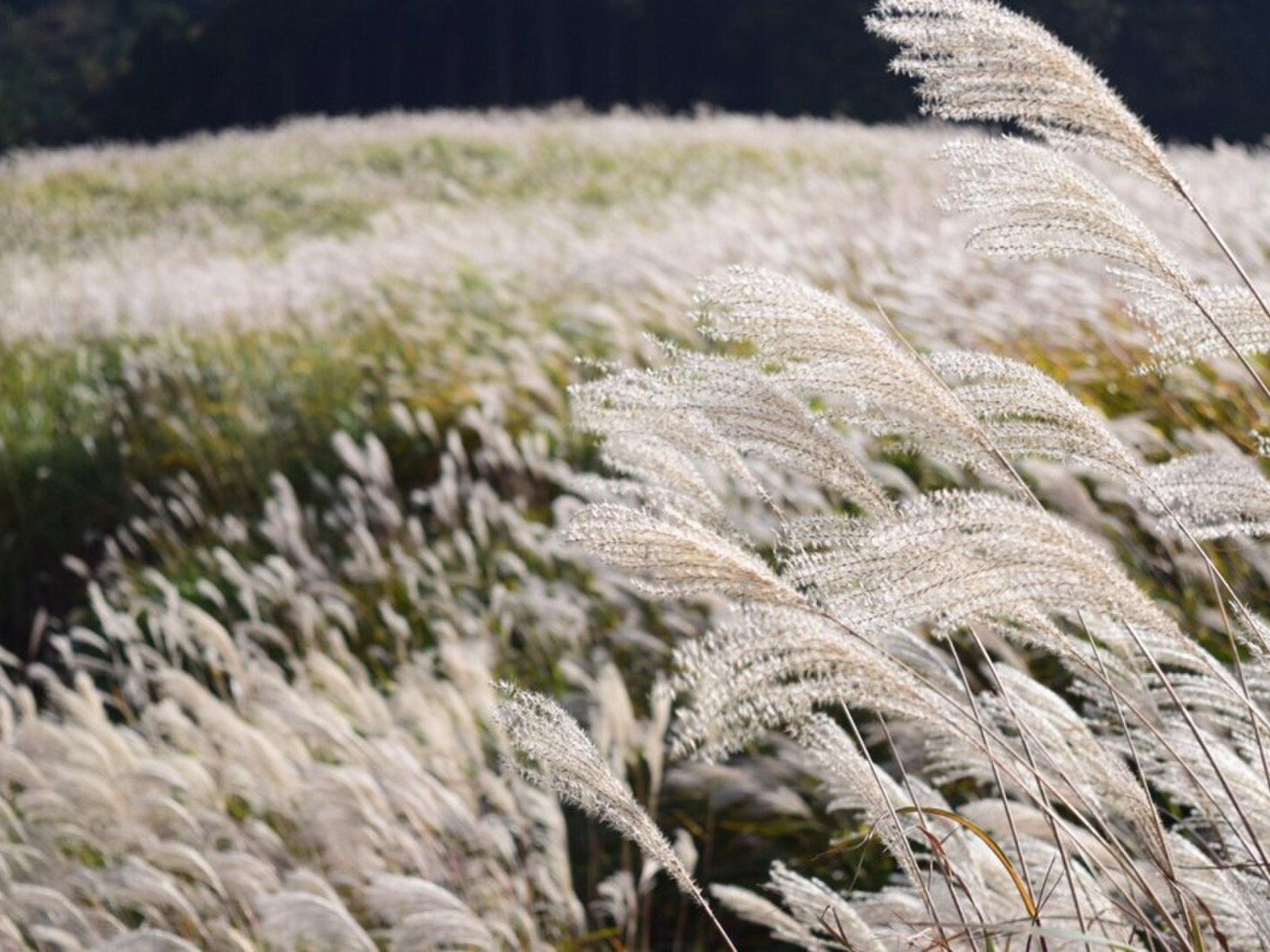2018年は秋の絶景旅へ。関東で見られる秋の景色ランキングTOP10♡