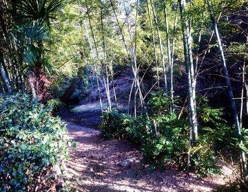 横浜自然お散歩デート/相鉄線鶴ヶ峰の穴場川沿いお散歩道。ピクニックにも!
